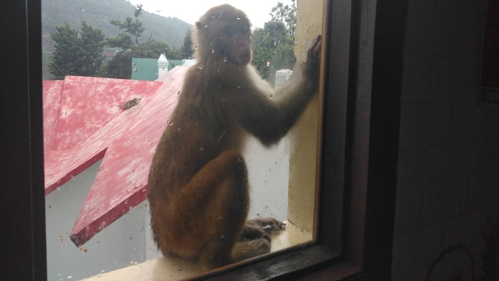 A monkey peeps in